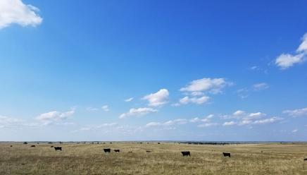 Pastures in Texas